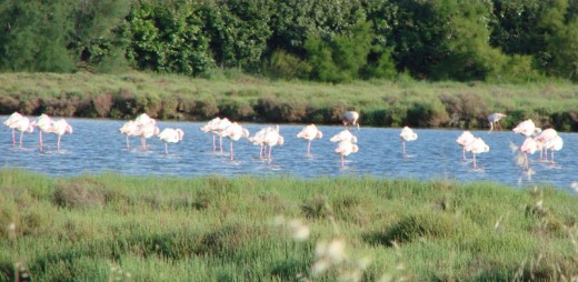 B2 image Pt Camargue flamingo's Headquarters